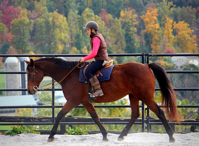 Horse Class Image